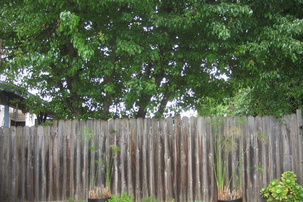 CATCHING UP » THE BACKYARD
