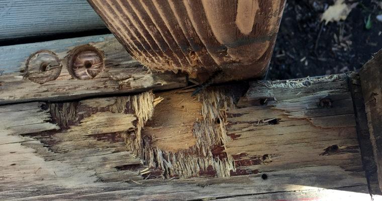 Updating the Screened Porch » Repair
